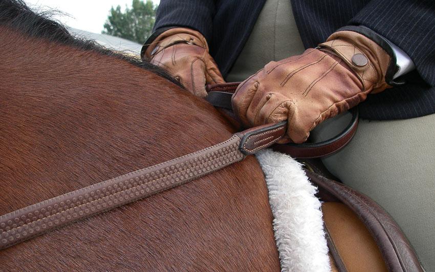 Sporthorses Stud Philosopie